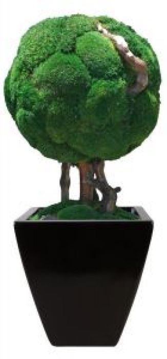 "30"" Single Moss Ball Bonsai"