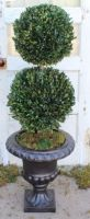 "40"" Boxwood Double Ball Topiary"