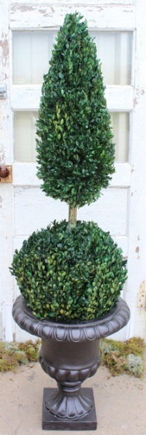 50 inch   Boxwood Ball Cone Topiary