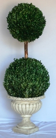 Preserved Double Ball Boxwood Topiary