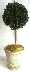 24 inch   Preserved Boxwood Single Ball Topiary