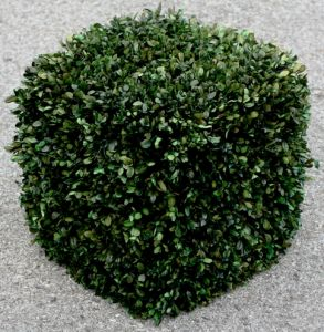 16 inch   Boxwood Cube Topiary