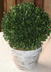 10 inch   Boxwood Globe Topiary