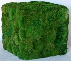 16 inch   Preserved Moss Square