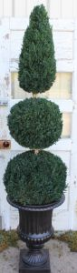 "60""Preserved Double Ball Cone Topiary"