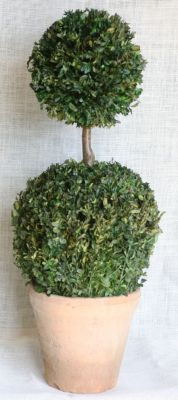 "30"" Preserved Boxwood Double Ball"