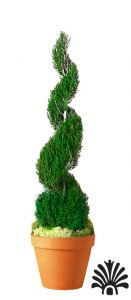 Preserved Classic Spiral Topiary 120 inch in Juniper Foliage