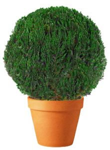 Preserved Globe Topiary 15 inch in Juniper Foliage