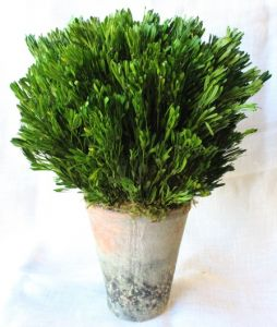 Preserved Platy Foliage Garden Pot