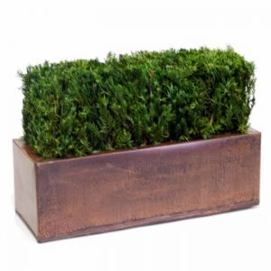 Table Top Hedge Topiary