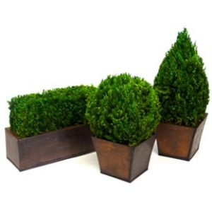 Tabletop Topiary Set
