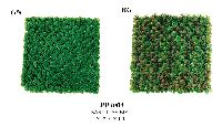 Artificial Topiary Trees, Topiary Wall, Baby Tear Mat Green Red Green