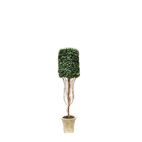 Artificial Topiary Trees, Hedge Topiary, PTP1229CY 3.5 Feet Cylinder Shape Boxwood in Paper Mache Pot