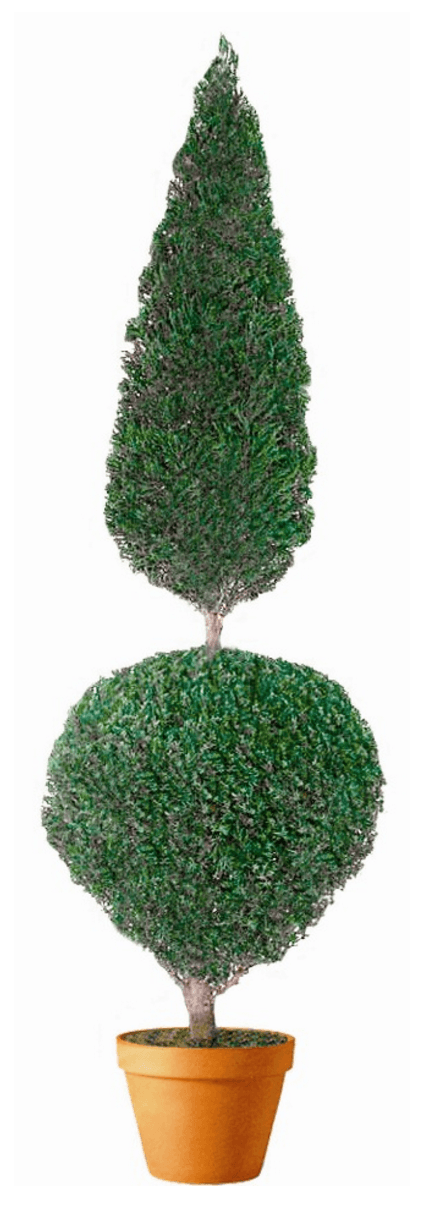 Preserved Cone and Ball Topiary 60 inches Tall