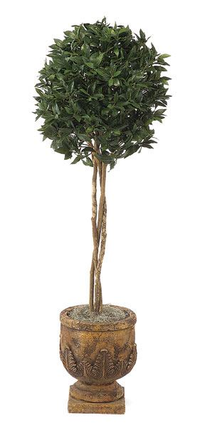 5 and 5 Foot Bay Leaf Single Ball Tree with Natural Trunks   1,628 Leaves   Green