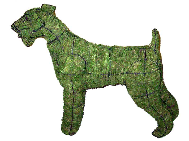 Airedale Moss Topiary, 6 inch  (Moss) 6 inch  x 12 inch  x 16 inch
