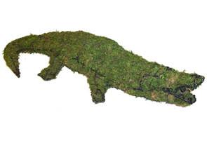 Alligator, 9 inch    (Mossed) 9 inch  x 49 inch  x 20 inch