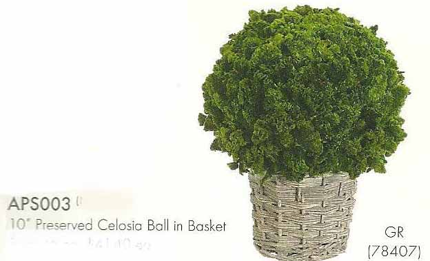10 inch Preserved Celosia Ball in Basket Green