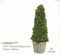 16 and 5 inch Preserved Celosia Cone Topiary in Basket Green
