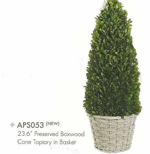 23 and 6 inch Preserved Boxwood Cone Topiary in Basket Green