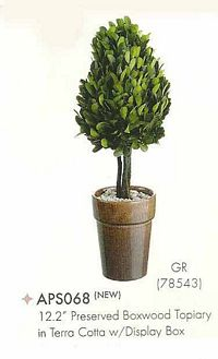 12 and 2 inch Preserved Boxwood Topiary in Terra Cotta with Display Box Green