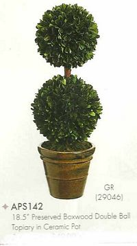 18 and 5 inch Preserved Boxwood Double Ball Topiary in Ceramic Pot Green