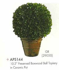 10 and 2 inch Preserved Boxwood Ball Topiary in Ceramic Pot Green