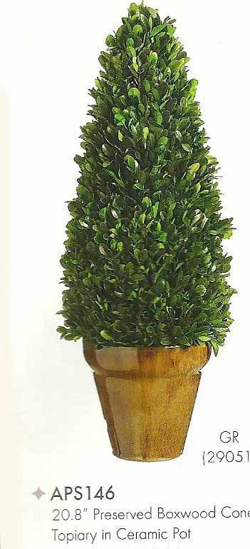 20 and 8 inch Preserved Boxwood Cone Topiary in Ceramic Pot Green