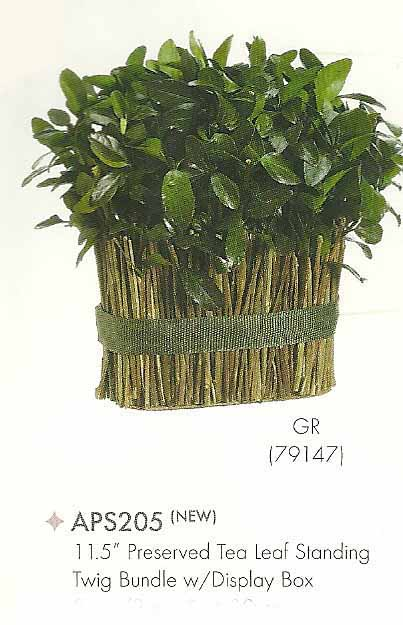 11 and 5 inch Preserved Tea Leaf Standing Twig Bundle with Display Box Green