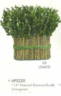 11 and 4 inch Preserved Boxwood Bundle Arrangement Green