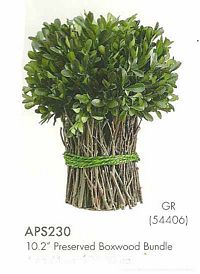 10 and 2 inch Preserved Boxwood Bundle Green