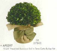 10 and 25 inch Preserved Boxwood Ball in Terra Cotta Burlap Pot Green