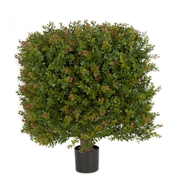 24 Inch Wintergreen Boxwood Square Topiary