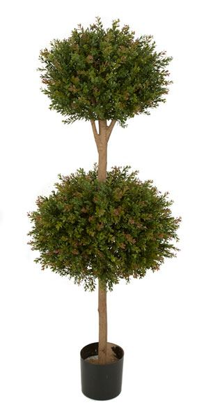 4 and 5 Foot Wintergreen Boxwood Double Ball Topiary