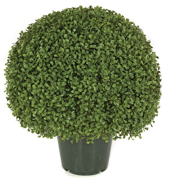 20 Inch Boxwood Ball Topiary Limited UV Protection