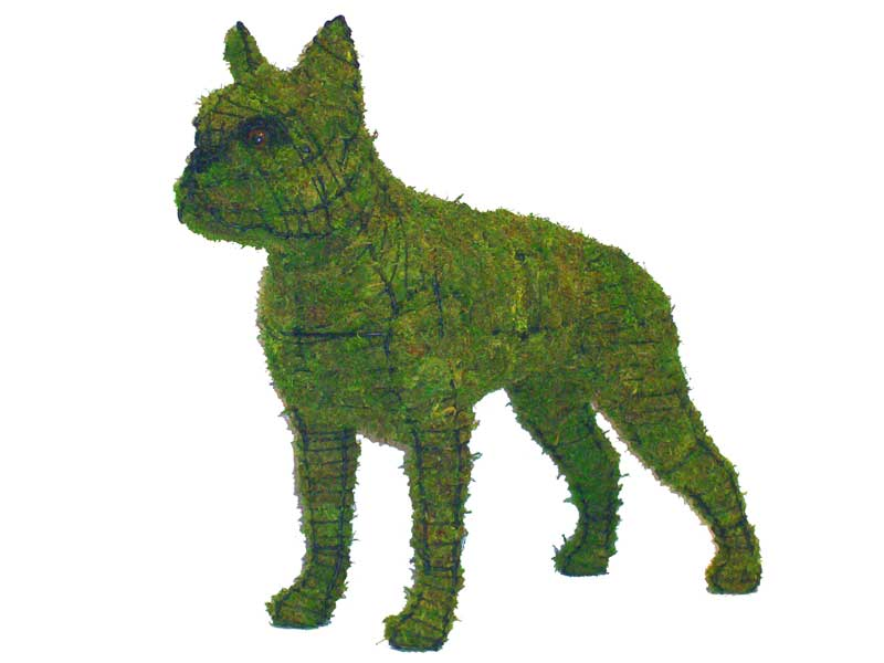 Boston Terrier, 20 inch (Mossed) 20 inch  x 23 inch  x 8 inch