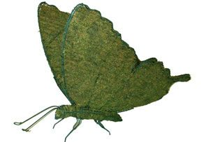 Butterfly, 20 inch   (Mossed) 20 inch  x 24 inch  x 10 inch