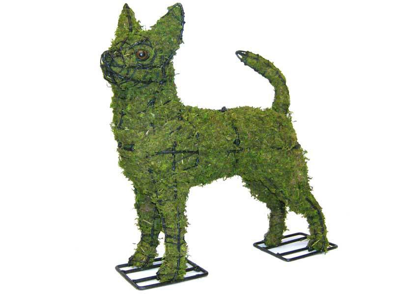 Chihuahua, 16 inch   (Mossed) 16 inch  x 16 inch  x 5 inch