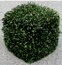 Cubed Preserved Boxwood Topiary Plant for Privacy
