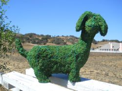 Dachshund Frame Topiary with Moss B 13 inches tall