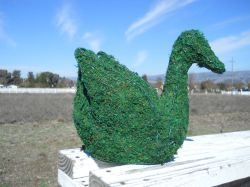 Duck Moss Topiary 12 inches tall