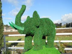Elephant Frame Topiary with Moss 17 inches tall