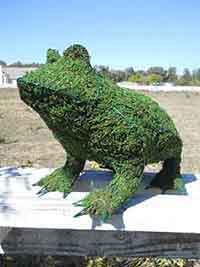 Frog Frame Topiary with Moss 14 inches tall