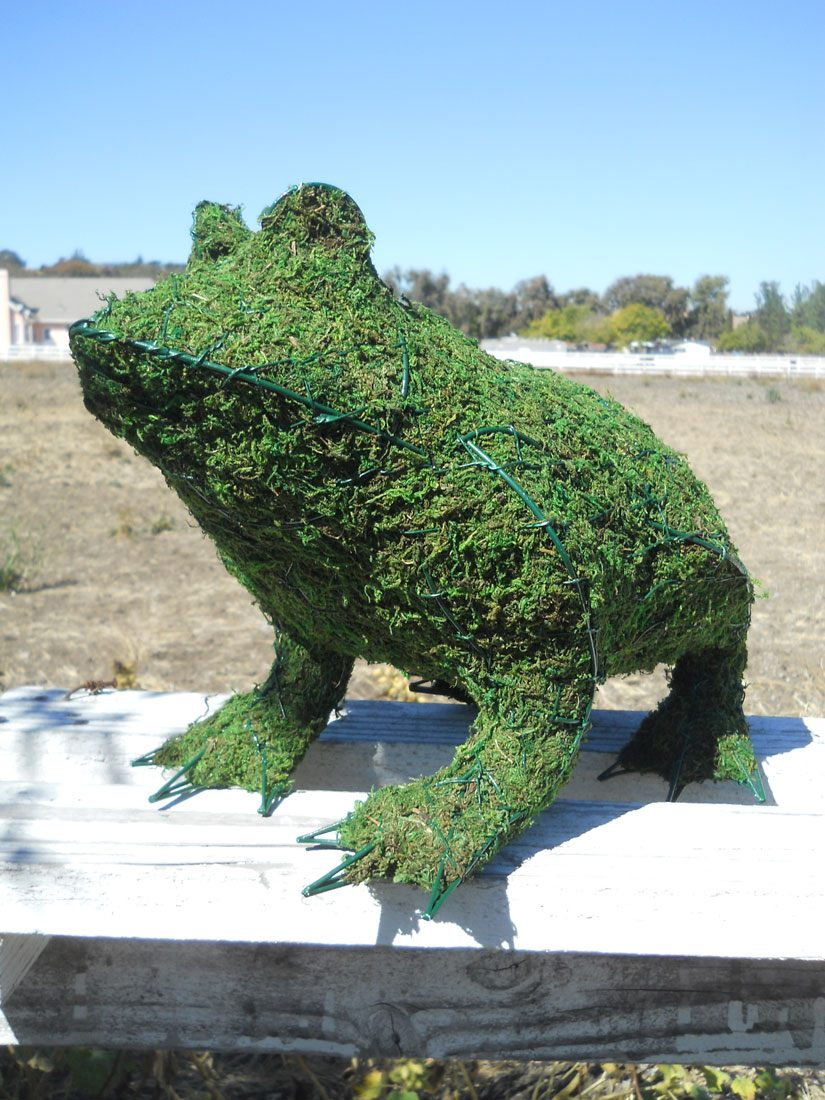 Frog Frame Topiary with Moss 13 inches tall