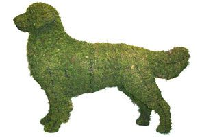 Golden Retriever, 31 inch  (Mossed) 31 inch  x 44 inch  x 11 inch