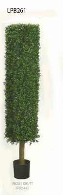 4 and 5 feet Round Boxwood Topiary in Plastic Pot Two Tone Green