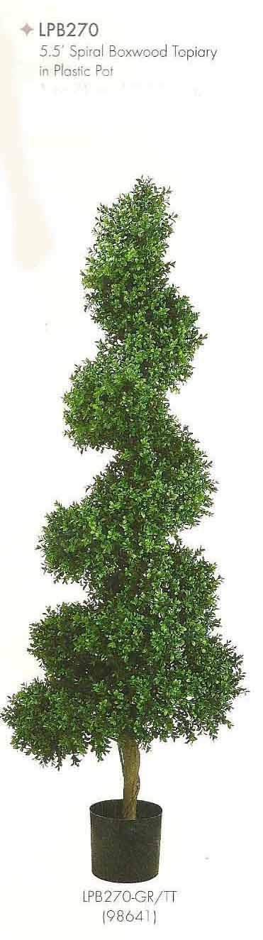 5.5 feet Spiral Boxwood Topiary in Plastic Pot Two Tone Green
