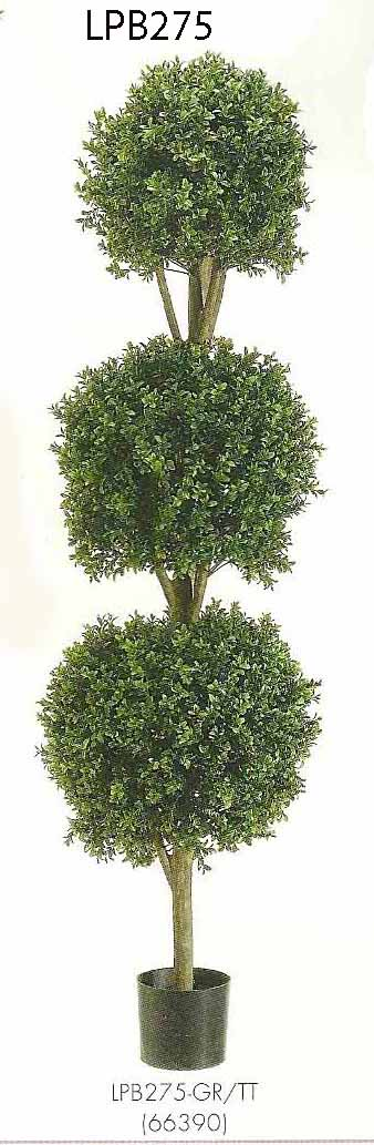 5 feet Triple Ball Shaped Boxwood Topiary in Plastic Pot Two Tone Green