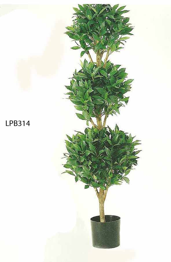 4 feet Triple Ball Sweet Bay Topiary in Pot