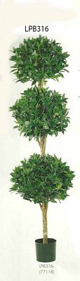 6 feet Triple Ball Sweet Bay Topiary in Pot